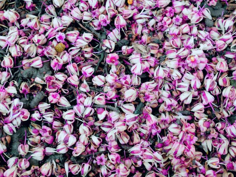 Weinig roze bloemachtergrond royalty-vrije stock foto