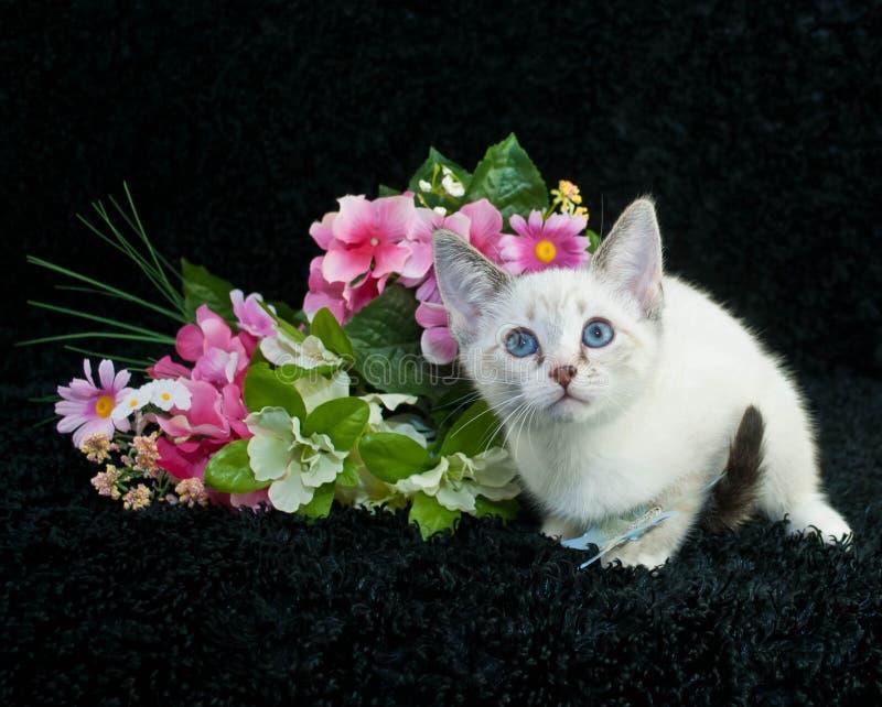 weinig Siamese katje stock fotografie