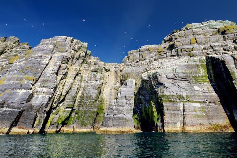 Weinig Skellig-Eiland, huis aan vele diverse zeevogels en de tweede - grootste jan-van-gentkolonie in de wereld, Provincie Kerry, royalty-vrije stock fotografie