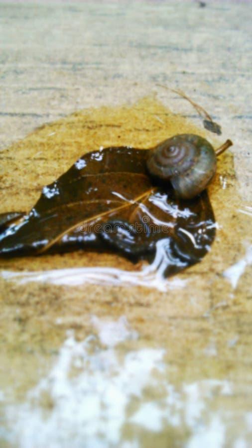 Weinig slak die in de regenachtige dag lopen royalty-vrije stock foto