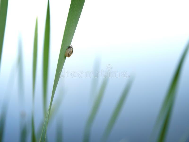 Weinig slak op blad van wild gras stock foto's