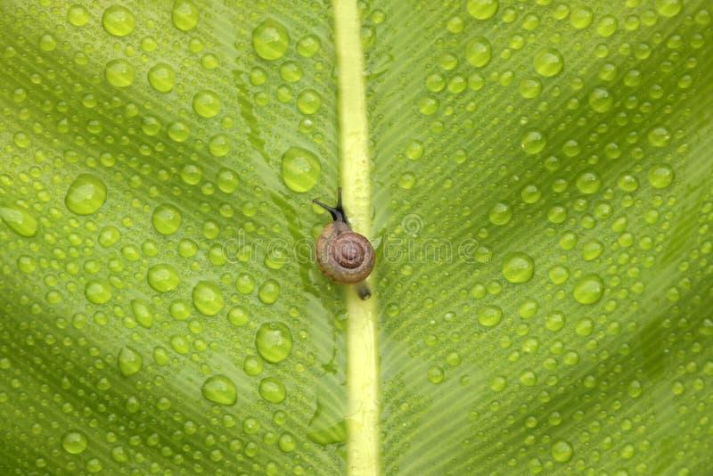 Weinig slak op groen blad royalty-vrije stock afbeeldingen
