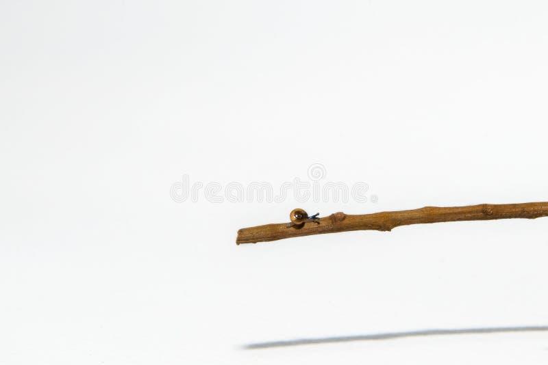 Weinig slak op klein een tak isoleerde witte achtergrond stock afbeeldingen