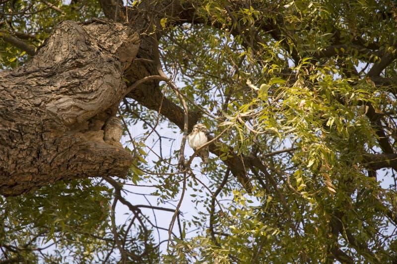Weinig slaperige uilzitting op reusachtig vertakte zich groene boom royalty-vrije stock foto's