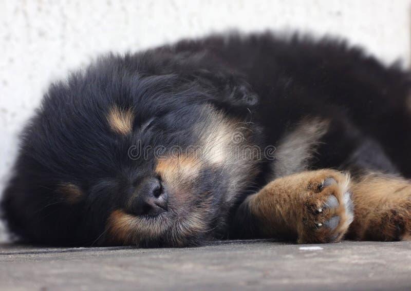 Weinig snoepje van de puppyslaap stock afbeelding