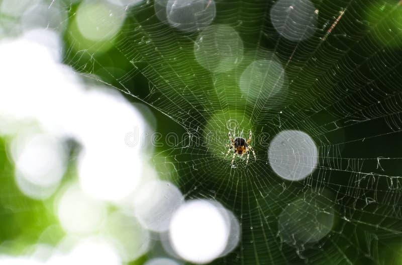 Weinig spin op het het glanzen Web op vage achtergrond van bosbokeh borrelt in groene bladeren stock fotografie