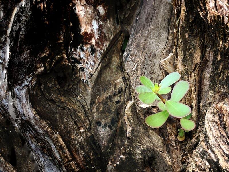 Weinig tak het groeien van grote boom stock fotografie