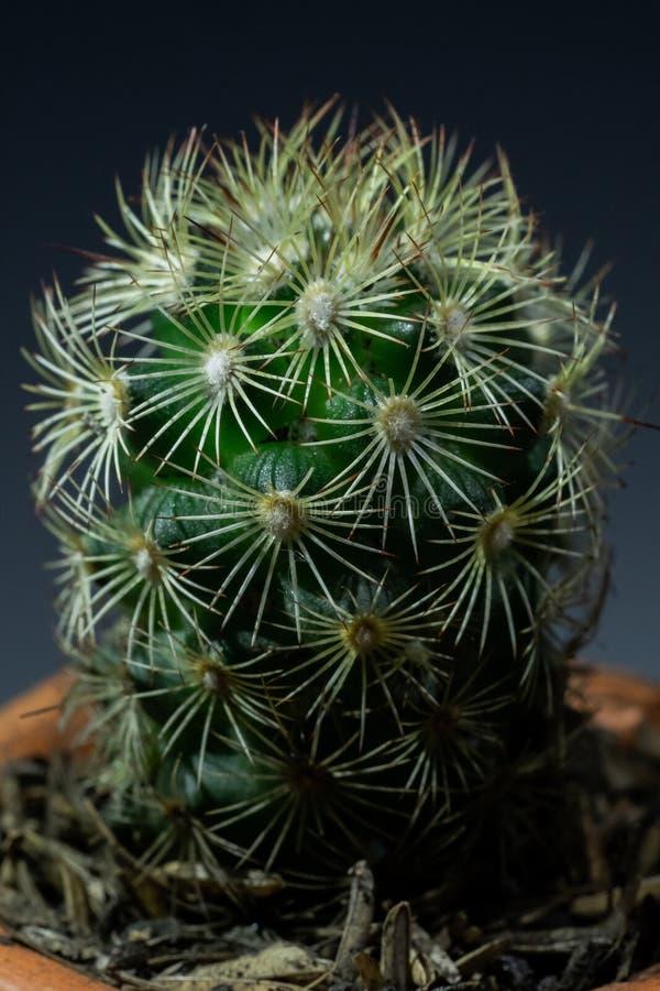 Weinig Tropische cactus groene dichte omhooggaand royalty-vrije stock foto's