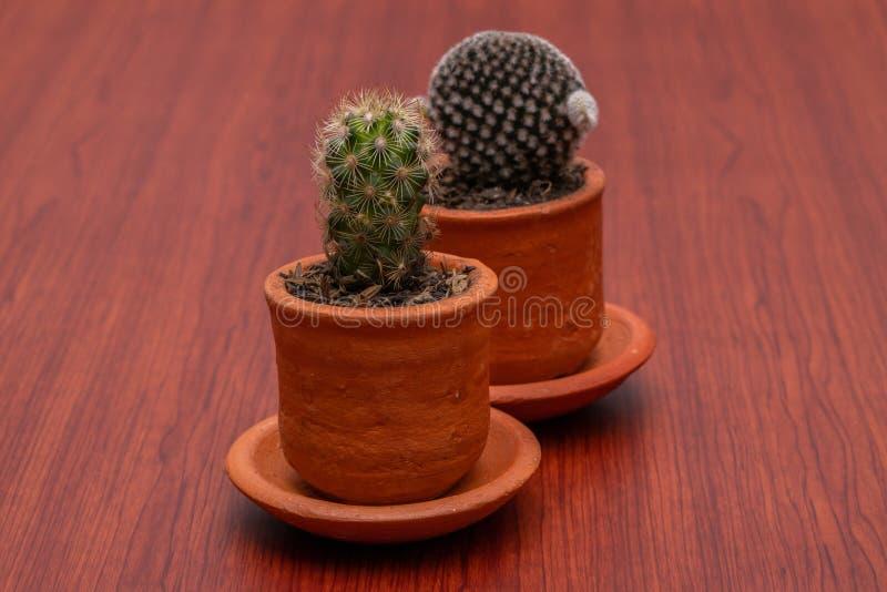 Weinig Tropische cactus groene dichte omhooggaand stock afbeelding