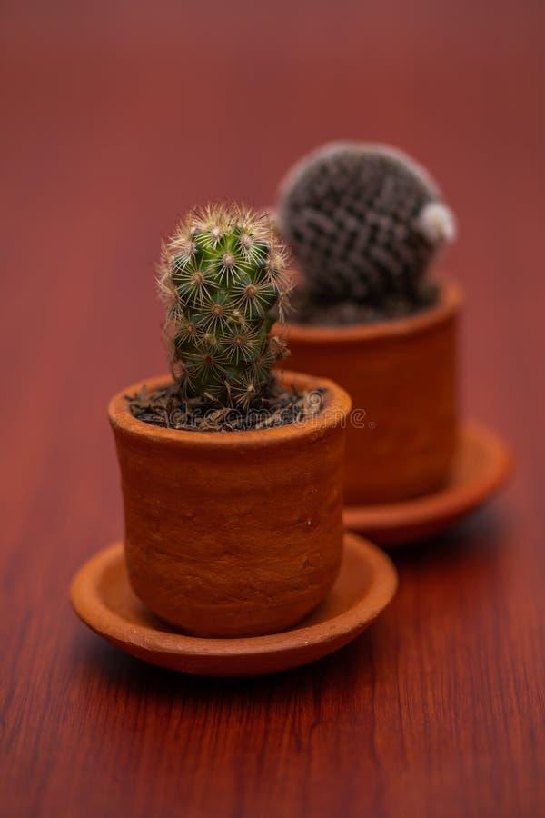 Weinig Tropische cactus groene dichte omhooggaand stock foto's