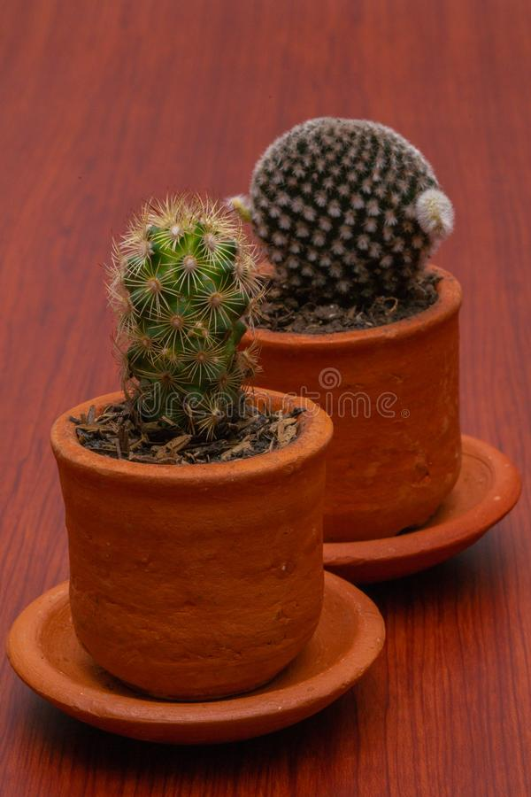 Weinig Tropische cactus groene dichte omhooggaand royalty-vrije stock afbeeldingen