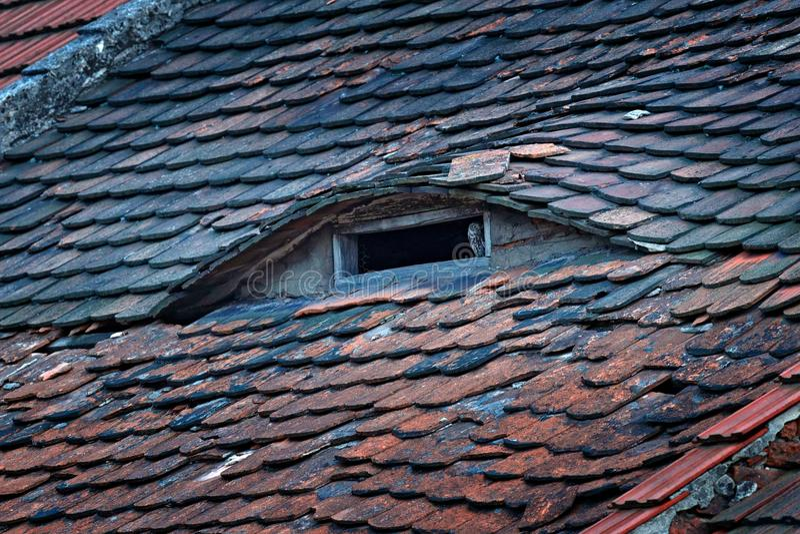 Weinig Uil, Athene-noctua, vogel in oude daktegel Het stedelijke wild, uil op dakschoorsteen Vogel met gele Tsjechische ogen, Het stock afbeelding