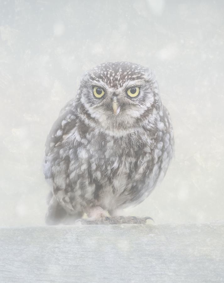 Weinig uil in sneeuw royalty-vrije stock afbeeldingen