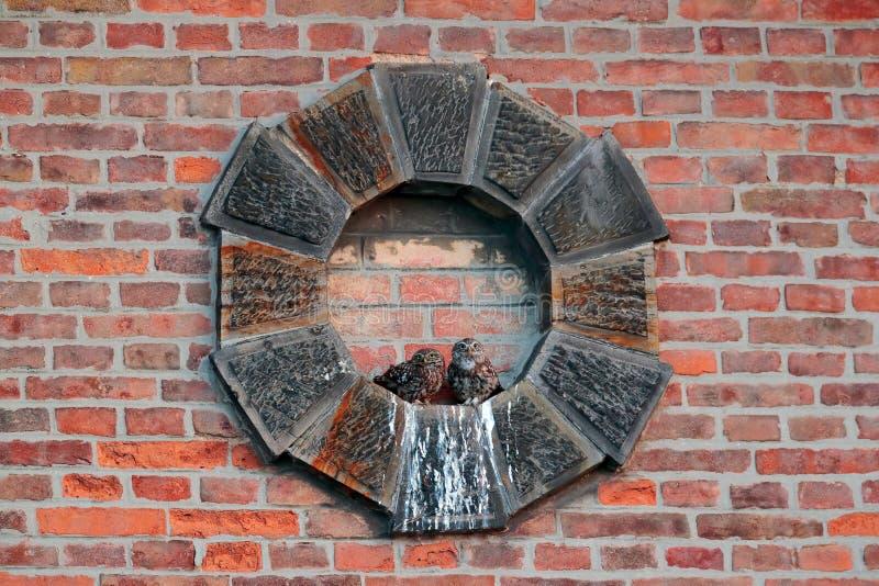 Weinig uilfamilie, moeder en jong, Athene-noctua Oranje bakstenen muur met twee uilen Het stedelijke wild met vogels Vogelobserva stock afbeeldingen