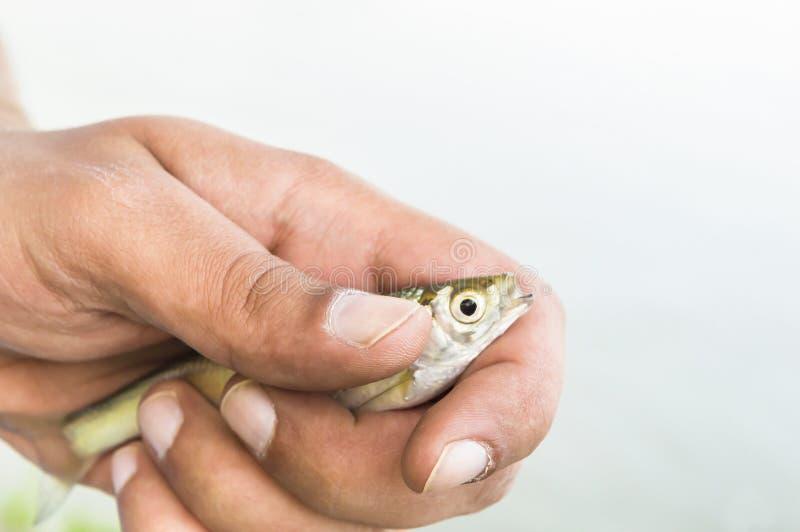 Weinig vis in geïsoleerde vissershanden royalty-vrije stock afbeeldingen