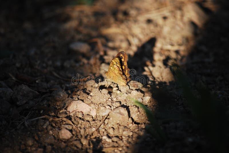 Weinig vlinder royalty-vrije stock afbeeldingen