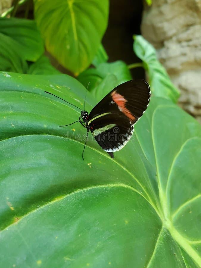 Weinig vlinder op groot blad royalty-vrije stock afbeeldingen