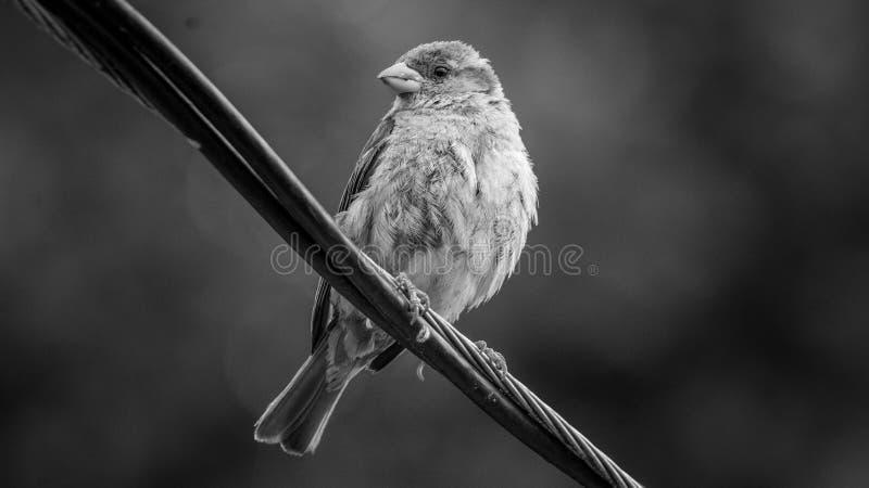 Weinig vogel stock fotografie