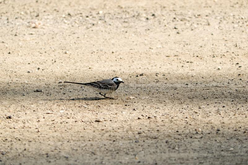 Weinig vogel in het park royalty-vrije stock fotografie