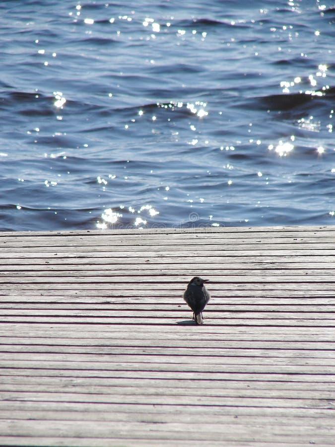 Weinig vogel Het wildscène van een aard stock fotografie