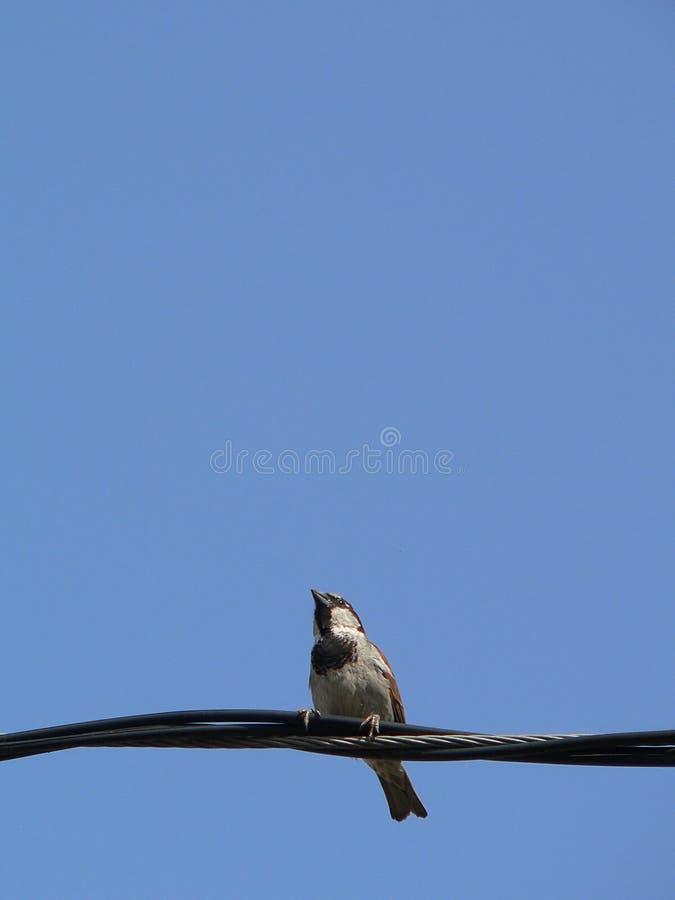 weinig vogel met blauwe hemel 5 stock afbeelding