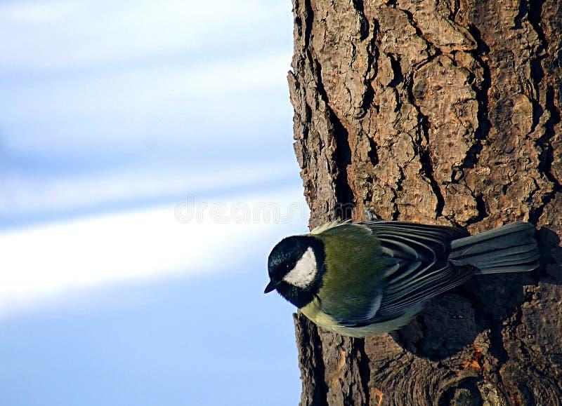 Weinig vogel op een boom royalty-vrije stock foto's