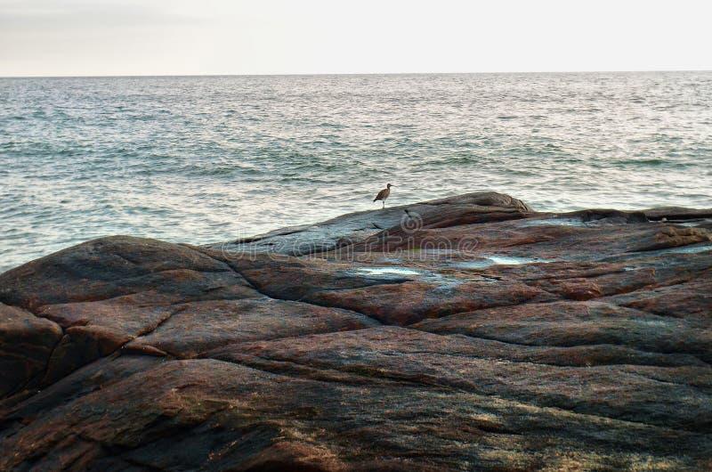 Weinig vogel op een grote steen bij achtergrond van oceaan royalty-vrije stock foto