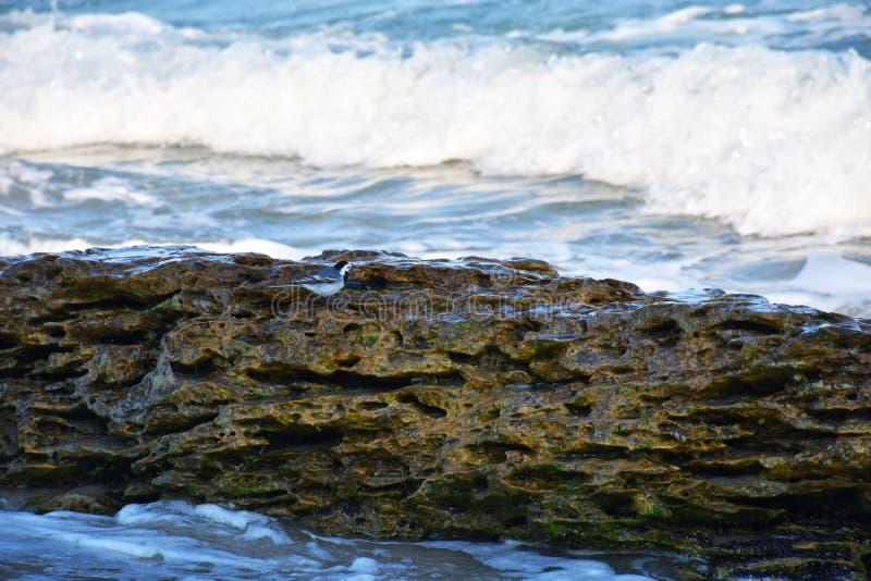 Weinig vogel op een steen door het overzees royalty-vrije stock foto's