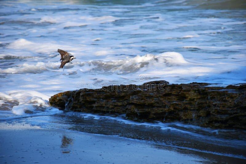 Weinig vogel op een steen door het overzees royalty-vrije stock afbeeldingen