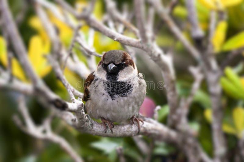 Weinig vogel op een tak