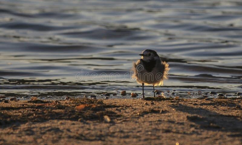 Weinig vogel op het strand stock foto