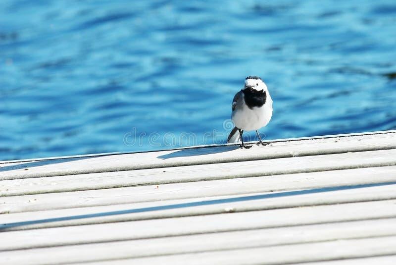 Weinig vogel zit op een pijler royalty-vrije stock foto