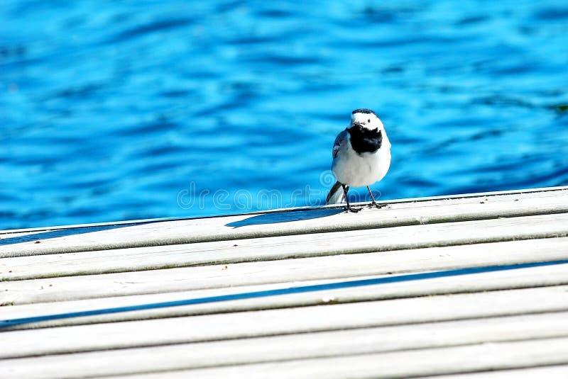 Weinig vogel zit op pijler over meer stock afbeeldingen