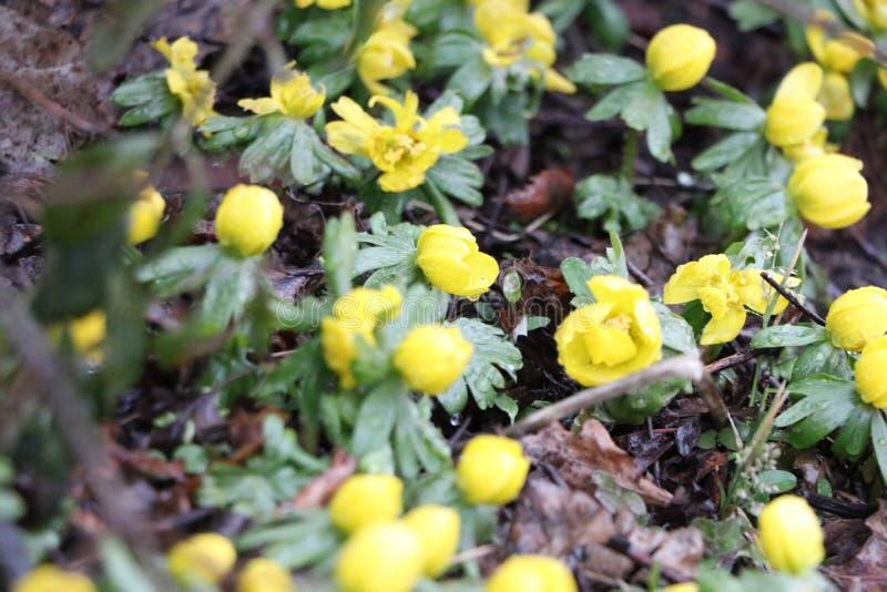 Weinig vrij gele bloemen royalty-vrije stock afbeeldingen