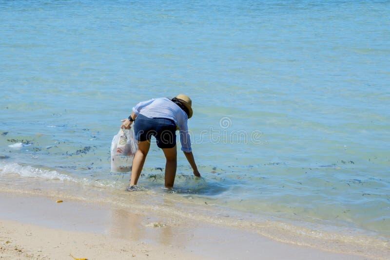 Weinig vrijwilligers schoonmakend mooi strand royalty-vrije stock afbeelding