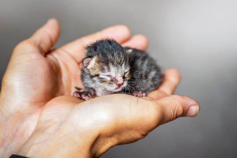 Weinig weerloos katje die schuilplaats op haar palmen zoeken bij vrouw royalty-vrije stock fotografie
