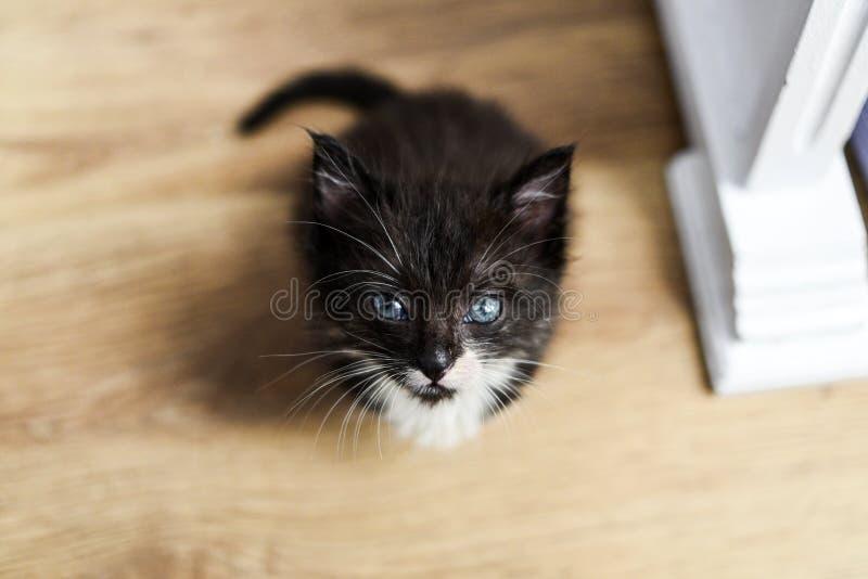 Weinig zoet zwart katje Weinig zoet zwart katje royalty-vrije stock afbeelding