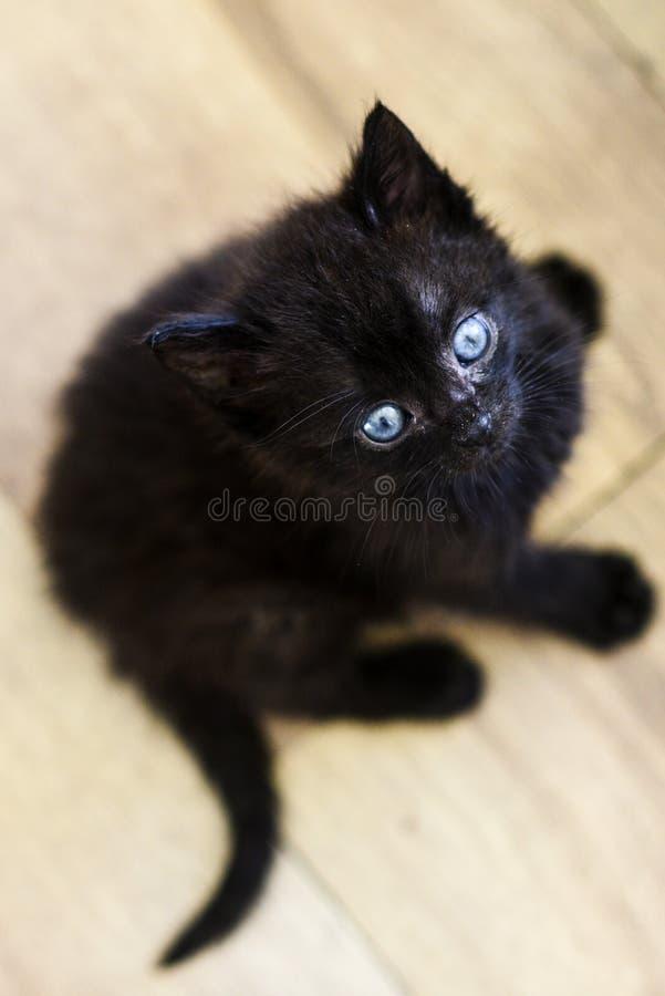 Weinig zoet zwart katje Weinig zoet zwart katje royalty-vrije stock foto