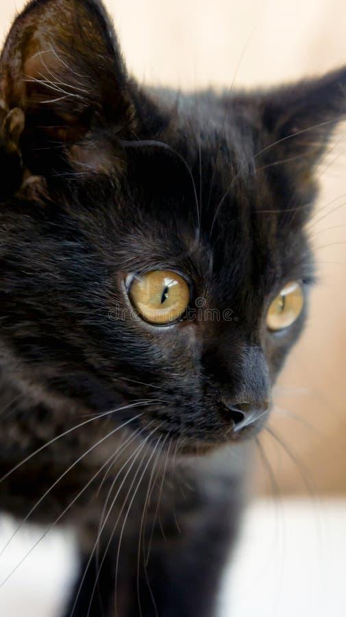 Weinig zwart katje met gele ogen stock foto