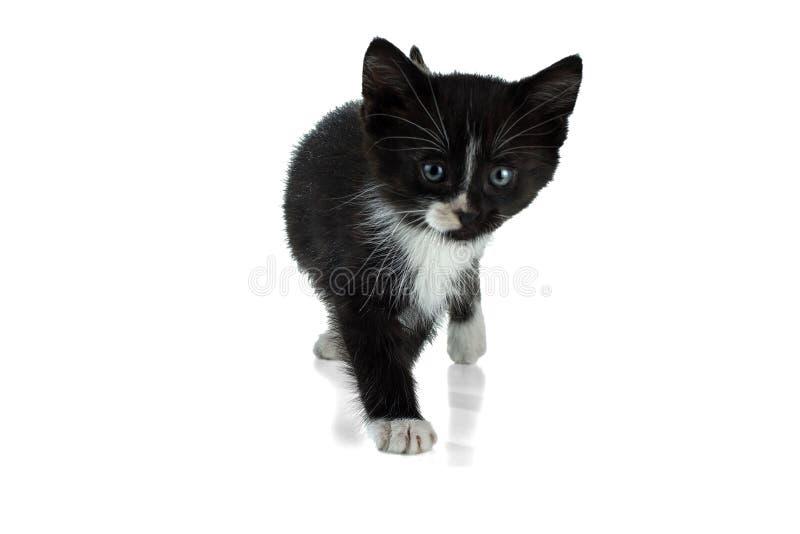 Weinig zwart-wit pluizig katje gaat op een wit stock fotografie