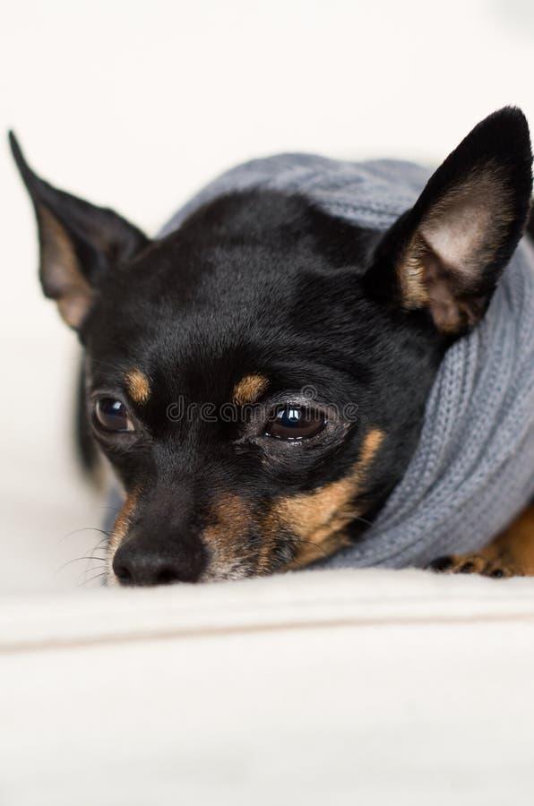Weinig zwarte hond stock foto
