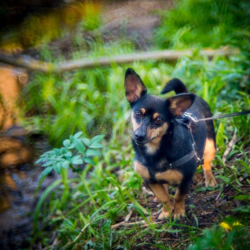 Weinig zwarte hond in bos royalty-vrije stock foto's