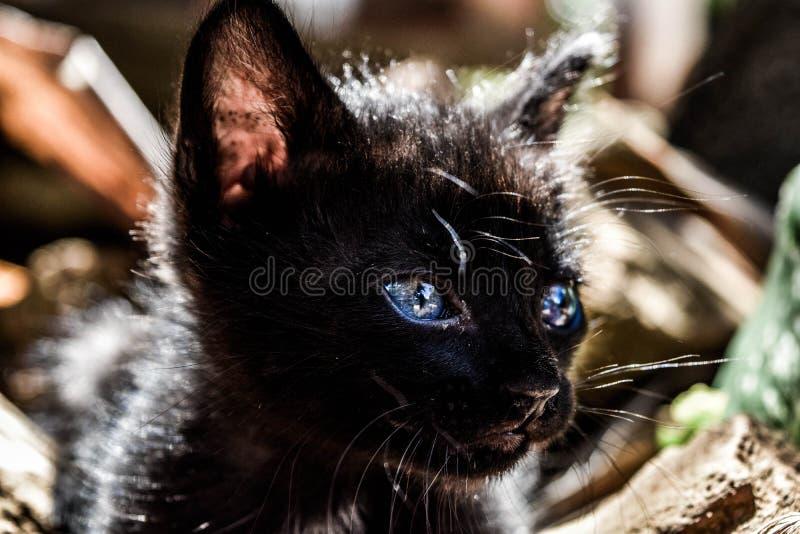 Weinig zwarte kat royalty-vrije stock fotografie