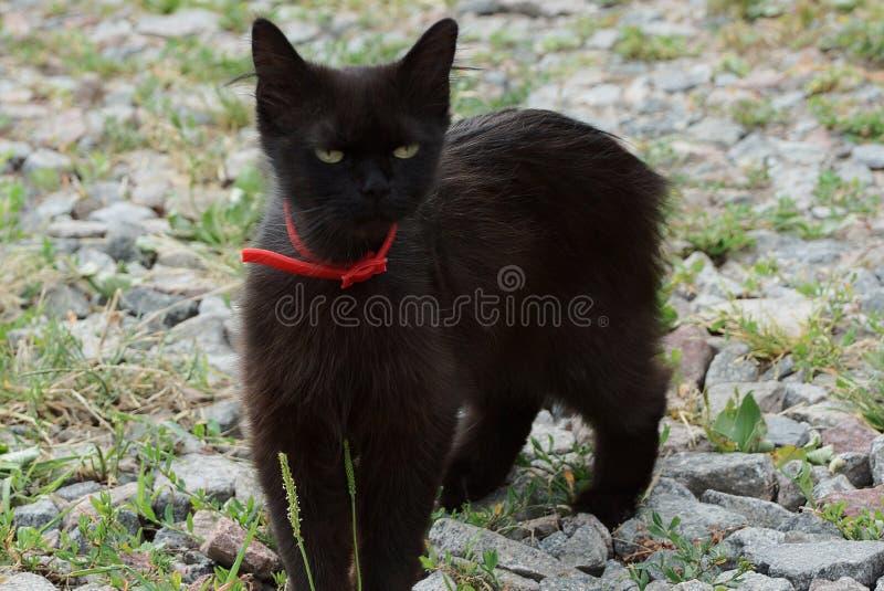 Weinig zwarte kat die zich op de straat in het gras en de stenen bevinden royalty-vrije stock fotografie