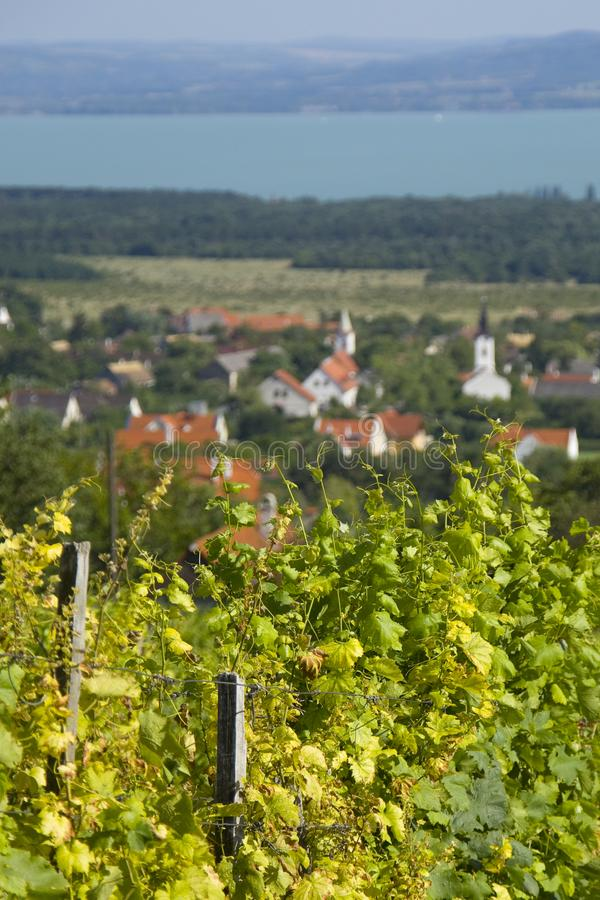 Weinkellerei nahe bei Dorf lizenzfreie stockfotos