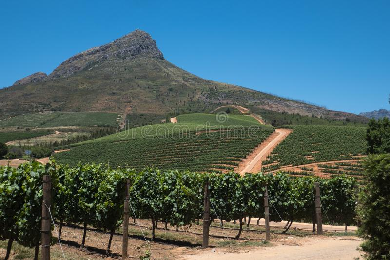 Weinkellerei Südafrika Delaire Graff lizenzfreie stockbilder