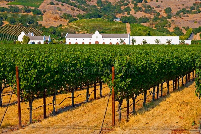 Weinkellerei am Sommer stockbild