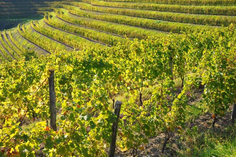 Weinkellerei und Wein Italien lizenzfreies stockbild