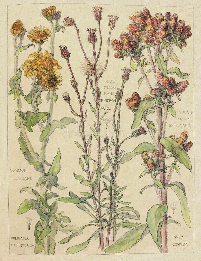Weinlese-Aquarell Wildflowers - Naturgeschichte - Botanik-Illustration - Zeitschriften-Papier - Einklebebuch-Digital-Collagen-Bes vektor abbildung