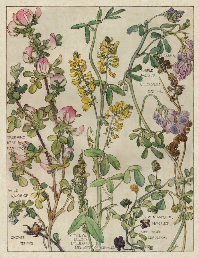 Weinlese-Aquarell Wildflowers - Naturgeschichte - Botanik-Illustration - Zeitschriften-Papier - Einklebebuch-Digital-Collagen-Bes lizenzfreie abbildung